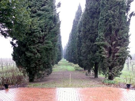 Cipressi lungo il viale di ingresso al Castello